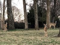Deer on campus of LPTS