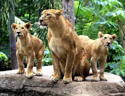 Pesona Keindahan Wisata Bali Zoo Park di Sukawati Gianyar ...