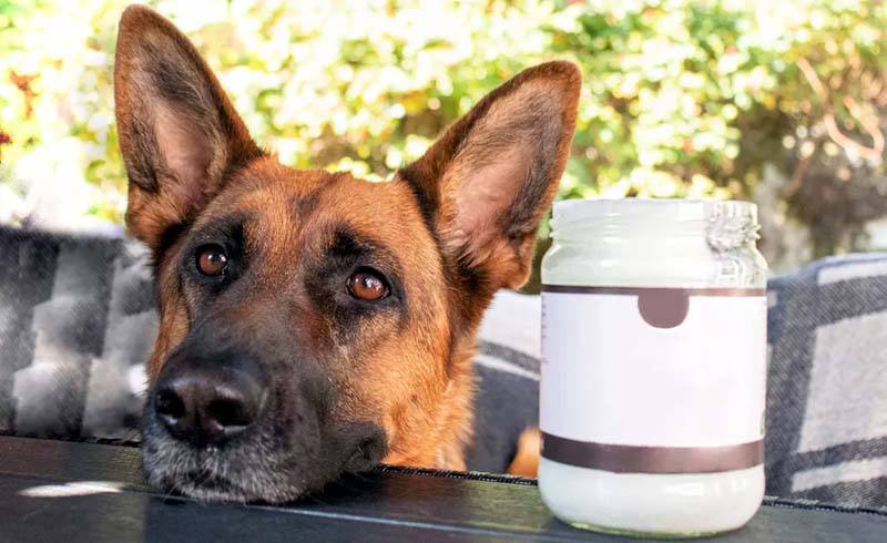 5 Uses of Coconut Oil for Dogs