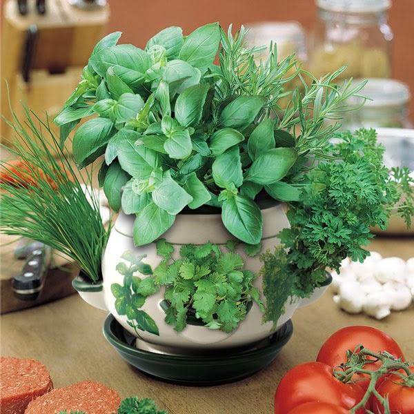 Tanaman Dapur Dalam Pot Desainrumahid Com