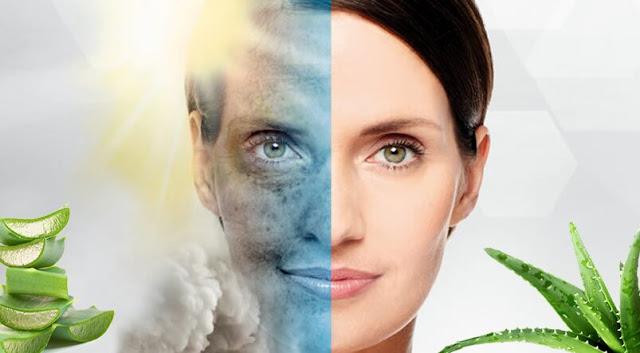 How to use aloe Vera aloe sunscreen for skin whitening?