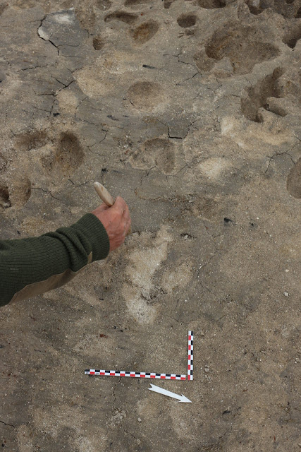 4,000 year old footprints discovered in Normandy