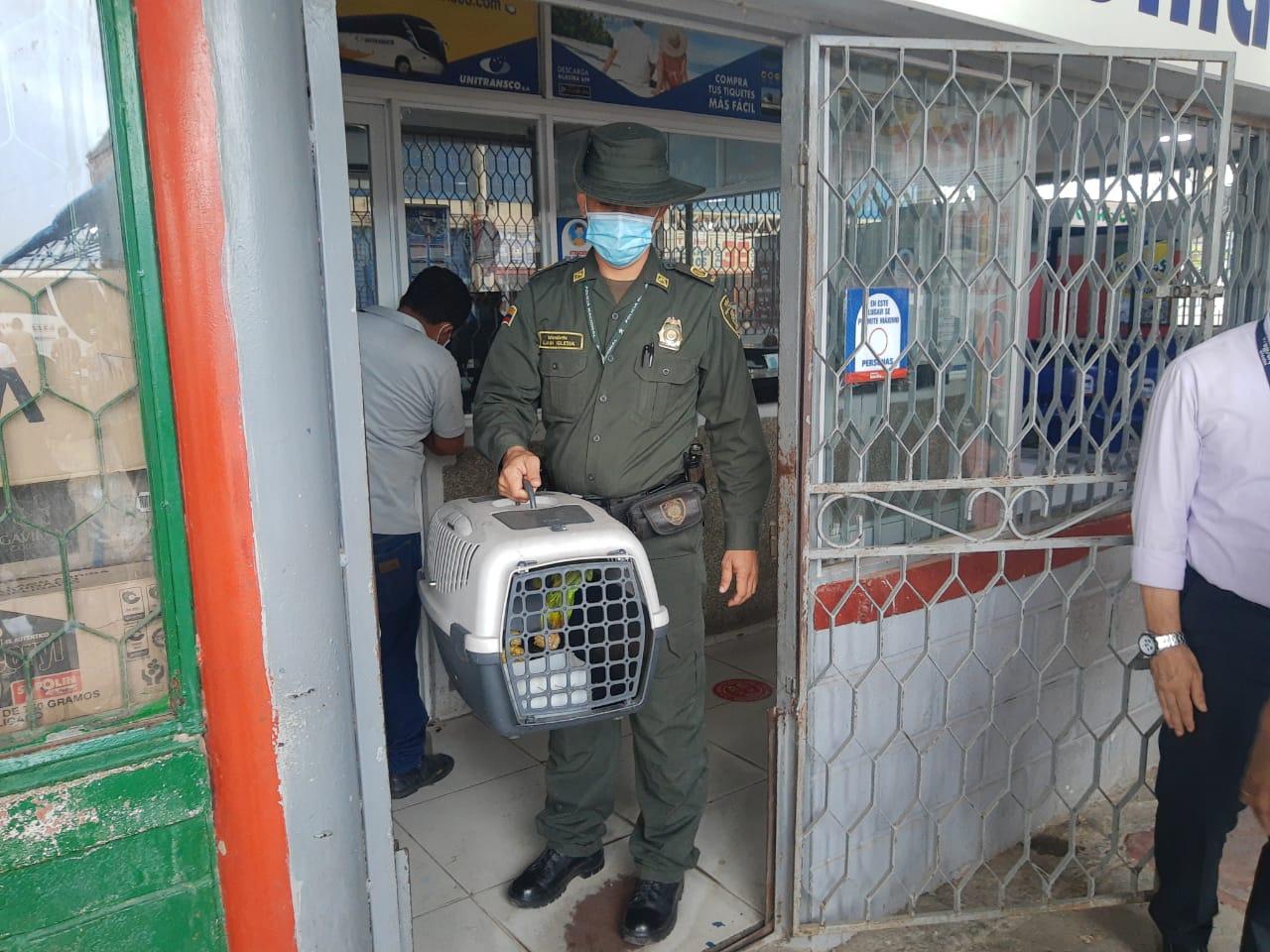hoyennoticia.com, Policía adelantó campaña para preservar especies en La Guajira