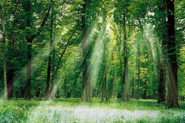 Sử dụng gỗ công nghiệp là góp phần chung tay bảo vệ rừng
