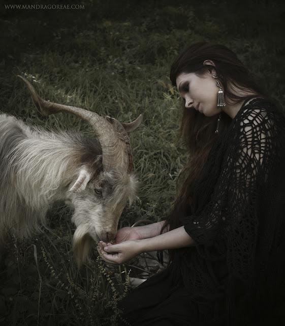 Meeting a friendly Male Goat, Akerra