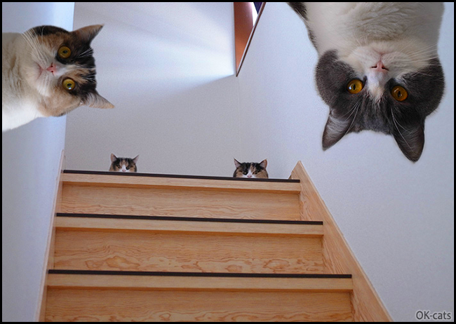 """Photoshopped Cat picture • Curiosity • Why cats are so curious? """"Whatcha doing Hooman, can we help you?"""""""