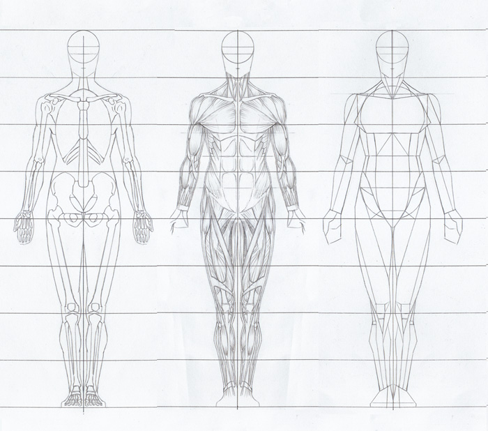 Paul Richer Artistic Anatomy Download