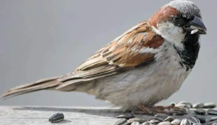 villagers saved life of a sparrow
