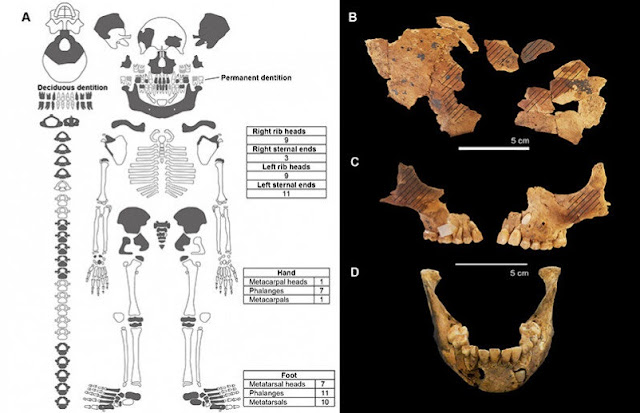 Rare 8,000 year old child burial discovered on Indonesia's Alor Island