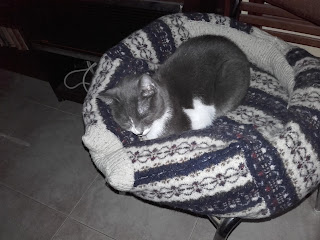 cat sleeping in home-made bed