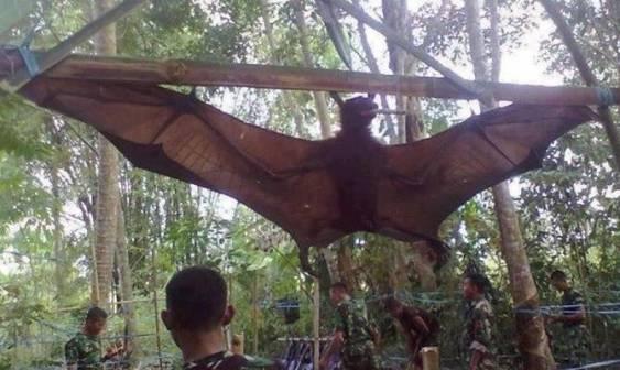 Fenomena misteri suku bati suku manusia kelelawar di indonesia