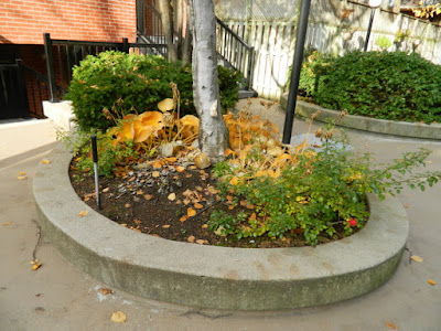 Downtown Courtyard Toronto Fall Cleanup Before by Paul Jung Gardening Services--a Toronto Gardening Services Company