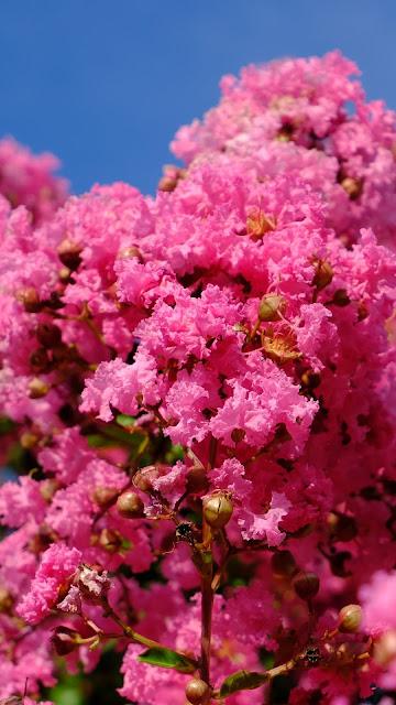 Wallpaper pink flowers, spring, pink bloom.