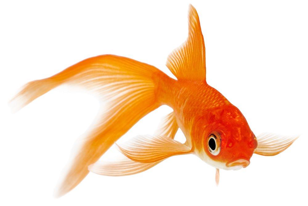 3betting aquariums betting sites ireland