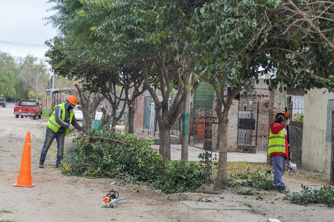 Plan de Poda Municipal: Más de 170 cuadras ya abordadas