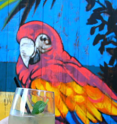 'parrot' sipping a cocktail