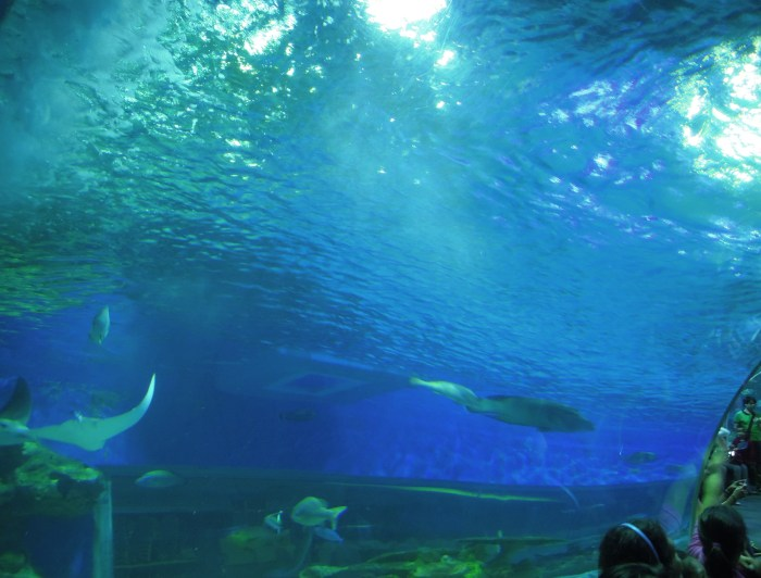 Stingrays, sharks, and fishes at Manila Ocean Park oceanarium