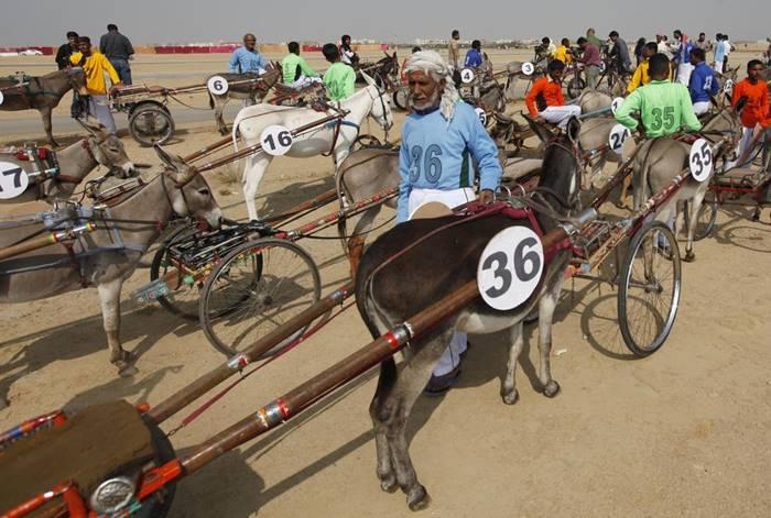 Pakistan's donkey derby
