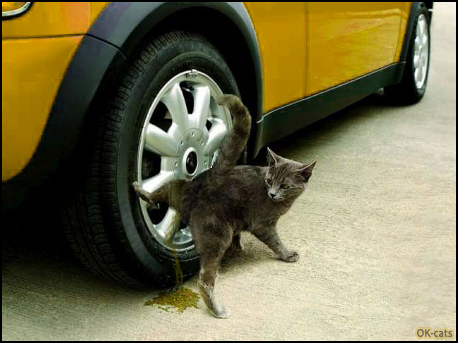 Photoshopped Cat picture • Crazy cat peeing on car wheel like a døg but he feels guilty, haha...