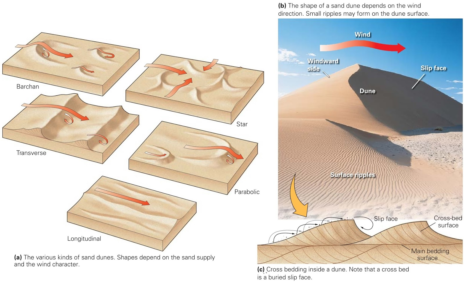 types of sand dunes diagram strat hsh wiring desert landscapes and life learning geology