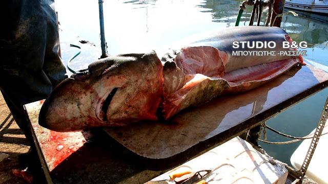 Γέμισε καρχαρίες ο Αργολικός; - Κι άλλον έβγαλαν στη Νέα Κίο (βίντεο)