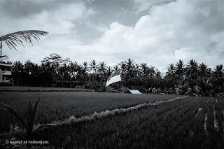 Ilustrasi Sejarah Perkembangan Bahasa Indonesia (Pixabay)