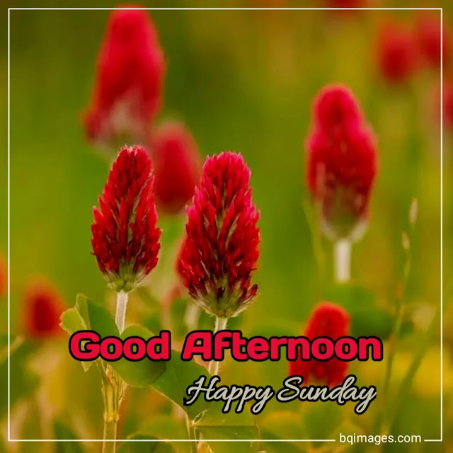 good afternoon sunday images