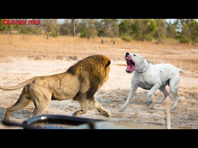 Best Viral Video On Social Media