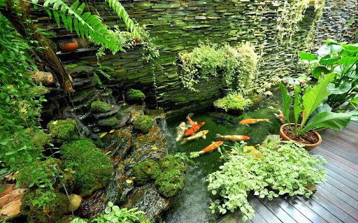 small backyard, backyard, backyard design, backyard design ideas, backyard pool, backyard pool design, garden deisgn, garden design ideas, backyard landscaping ideas, backyard landscape design, landscape design, garden house design, home garden, fish pond design, pool design, fish pond design, fish pond picture, small fish pond