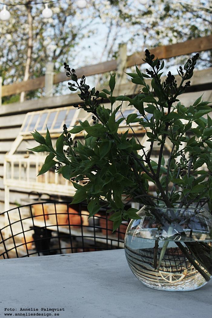 uteplats, trädäck, trädäcket, altan, altanen, utomhus, syren, syrener, blommor, betongbord, betong, diy bord, växthus, industriellt växthus, green house, patio, sommar, annelies design, getskinn, skinn, fäll, utemöbler, möbler, jotex stolar, stol, trädgårdsmöbler, trädgård, webbutik, webbutiker, webshop, exterior, exteriör,