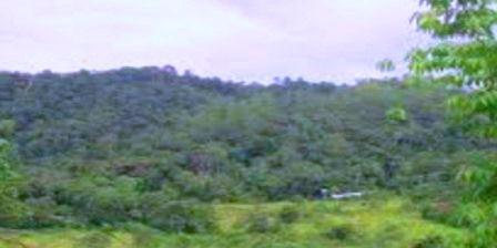 Cagar Alam Jantho cagar alam pinus jantho cagar alam hutan pinus janthoi cagar alam hutan pinus janthoi aceh besar cagar alam hutan pinus janthoi aceh