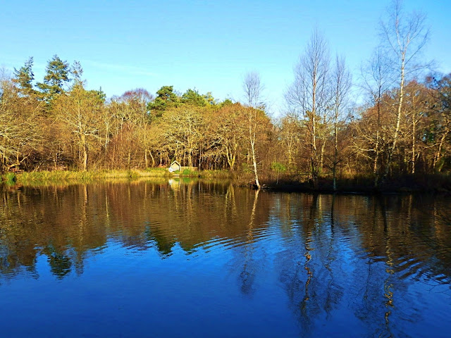 Pinetum Gardens lake, Cornwall