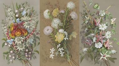 Ellis Rowan y las flores silvestres de Australia