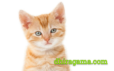 Kucing Nabi Muhammad SAW