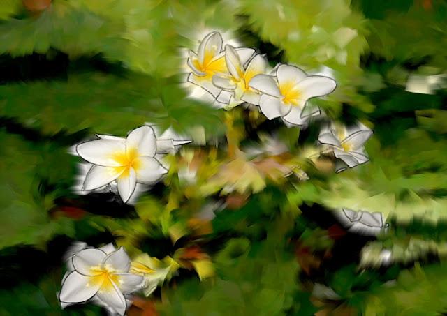 foto pinturas fotografía, imágenes, arte digital, de flores, árboles, olas y temporales, abstracto, abstracta,