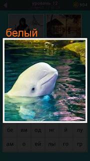 белый дельфин показал свою голову из воды 667 слов 12 уровень