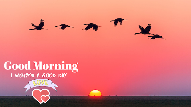 The sun rises with the birds. good morning images