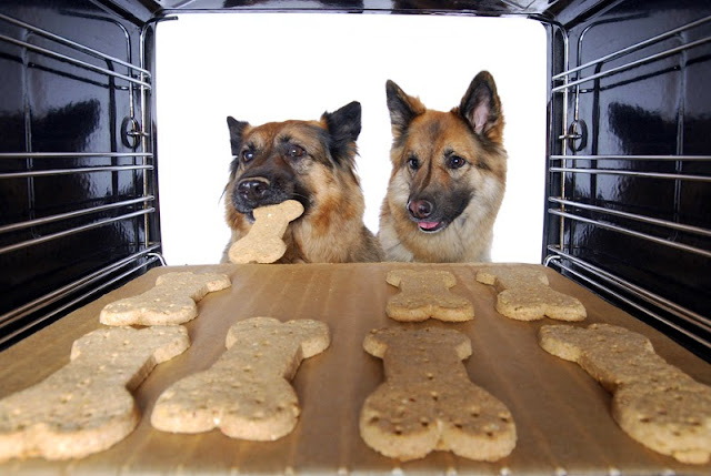 Two German Shepherd Dogs take dog cookies from the oven