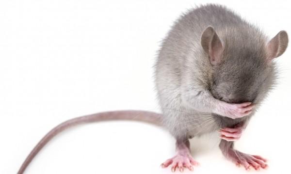 Мишка тупна върху журналист от тавана на Белия дом