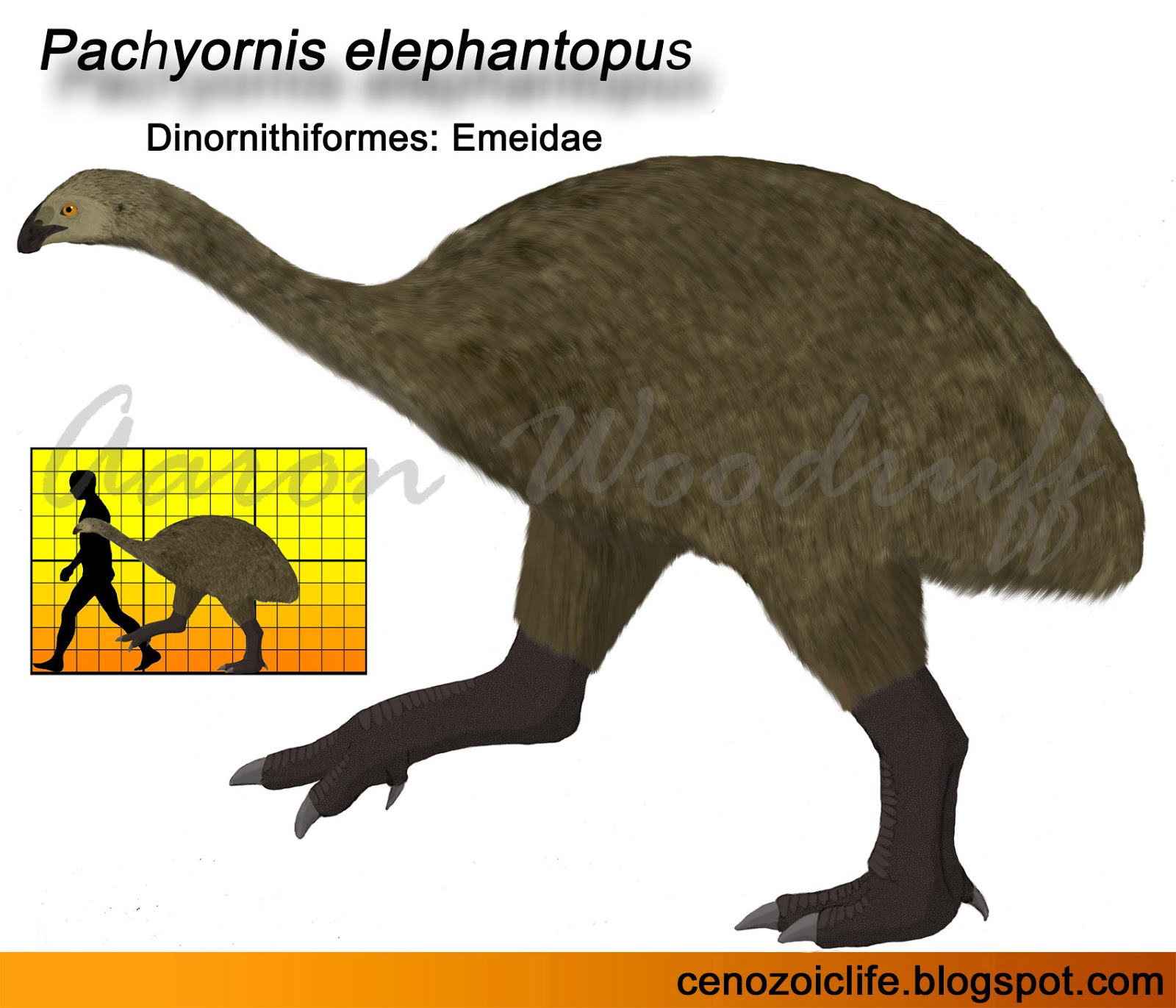 Life in the cenozoic era 2017 physical attributes pooptronica