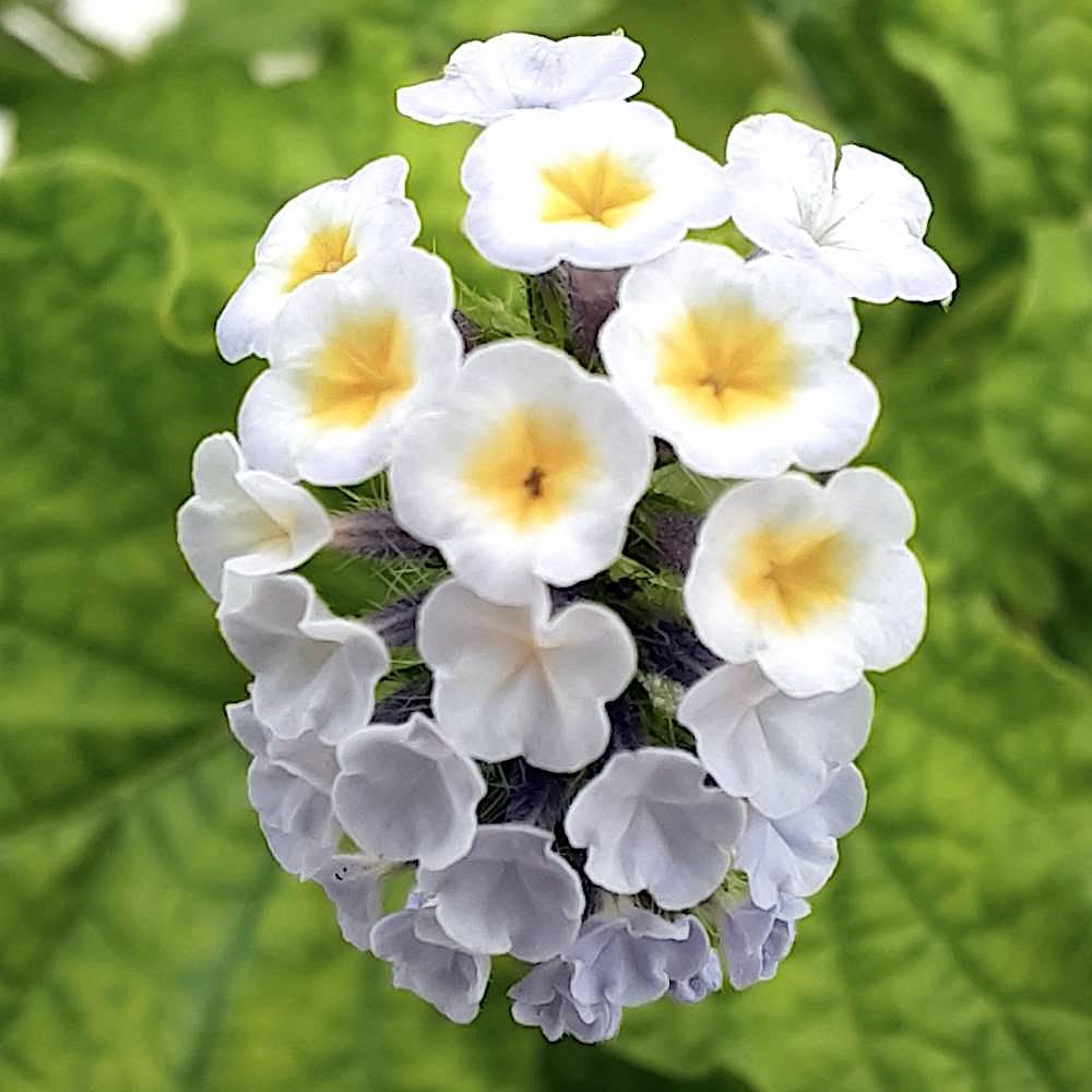 literatura paraibana clovis roberto miniaturas flor beleza poesia natureza olhar