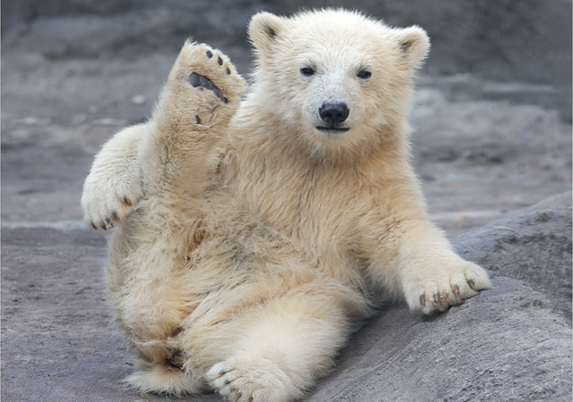 🐻Beautiful🐻 Bear Images Black Bear Photos Free Download