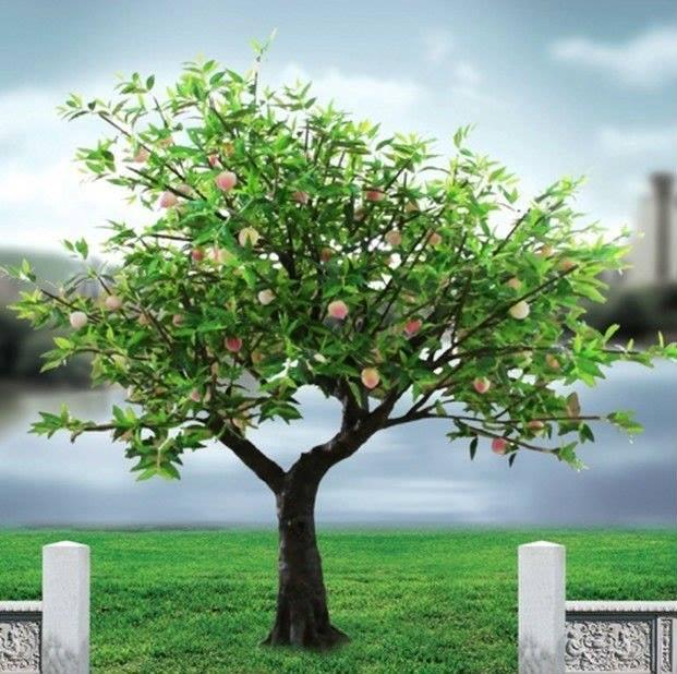 Cada rbol se conoce por su fruto for Arbol de frutos rojos pequenos