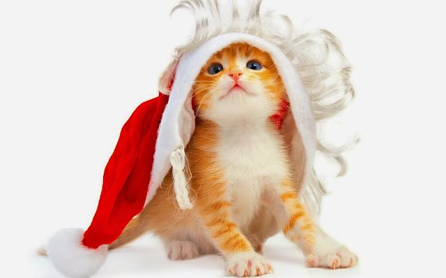 Plaatje met rood katje met kerstmuts