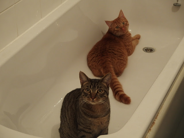 Calendar front cover: Skipper and Spot are obsessed with baths