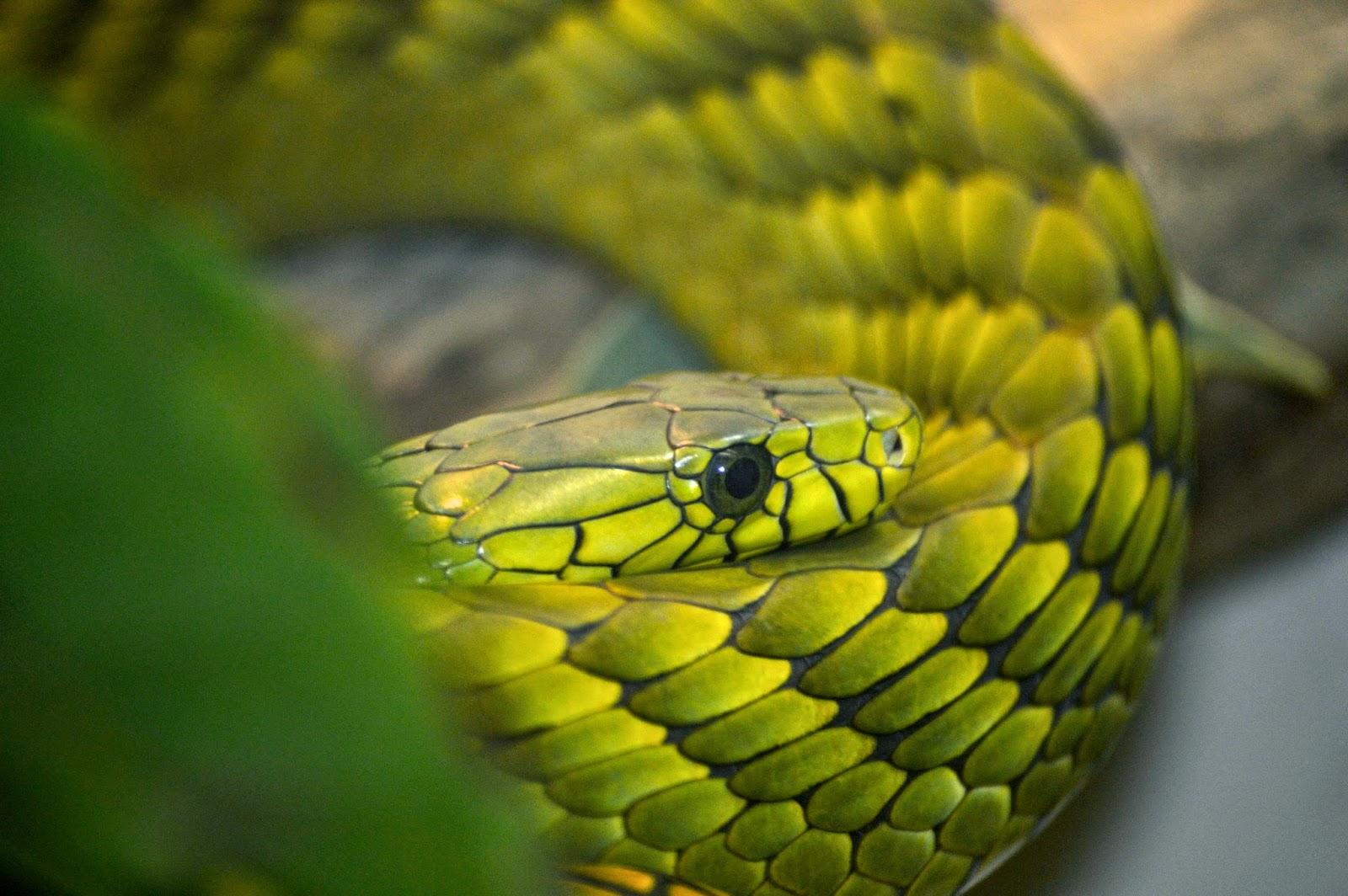 Nikon-D3200-Image-example-snake