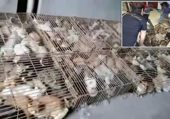 Keji, Warga China Selundupkan Ratusan Kucing untuk Dimakan