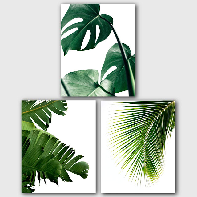 Monstera, Banana, Palm Leaves