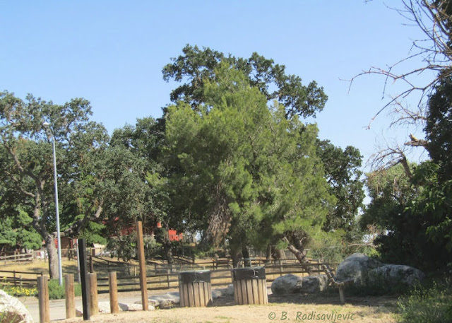 """""""Larry"""" Moore Park in Paso Robles: A Photographic Review: Salinas River Trail Beginning at South End of Park"""