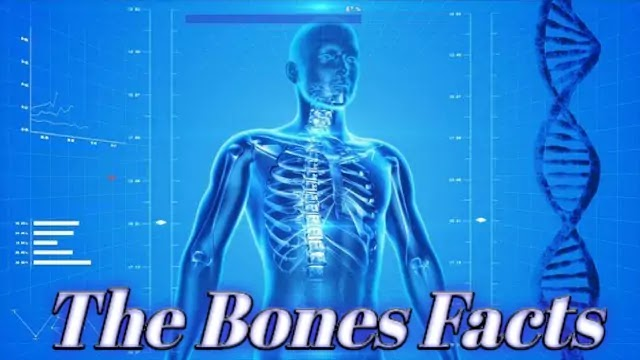 Show the ten amazing fact about bones and muscles.